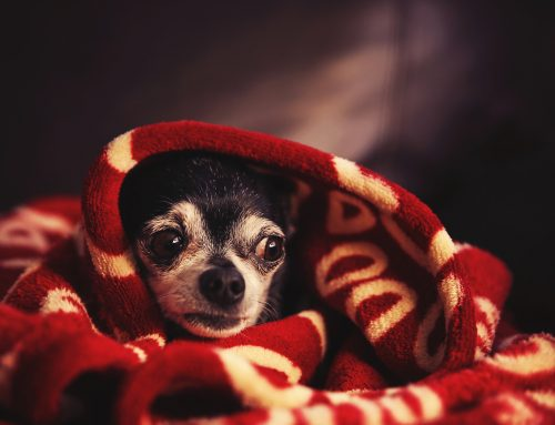 Taking the Pet Out of Petrified: What Fear Free Certification Means for Your Pet