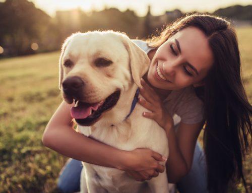 Pet Parasite Prevention Made Simple
