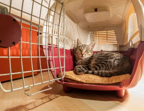 Fear Free Veterinary Visits Start At Home