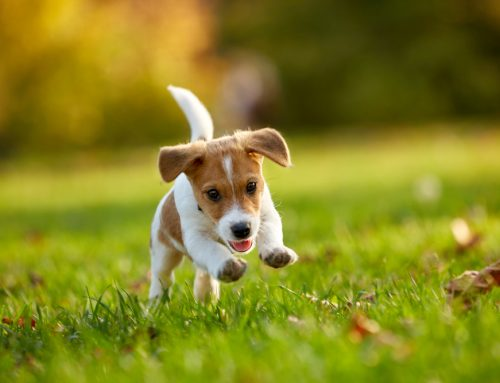 My Puppy Can Give Me What? 5 Zoonotic Parasites and How to Prevent Them