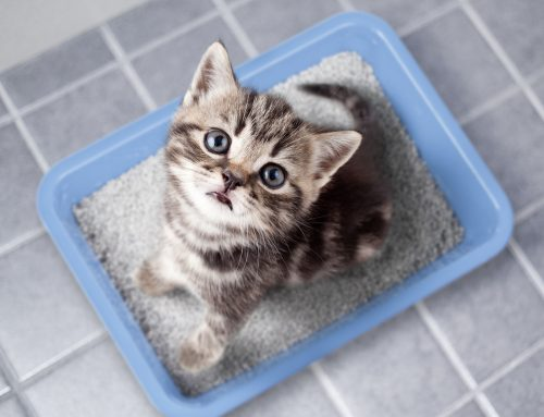 Litter Box Rules—Setting Your Cat Up for Success