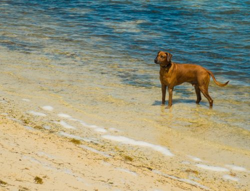 A Pet Owner's Guide to Parasitic Diseases