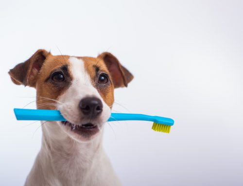 5 Dental Care Tips for Your Puppy