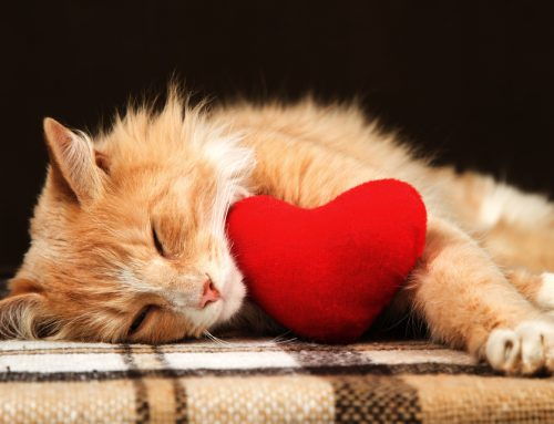 A Pet Owner's Guide to Heart Disease